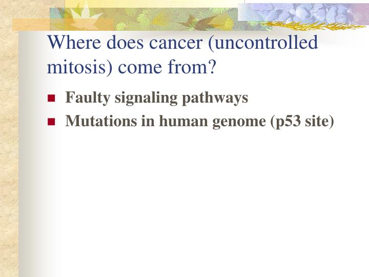Where does cancer (uncontrolled mitosis) come from?
