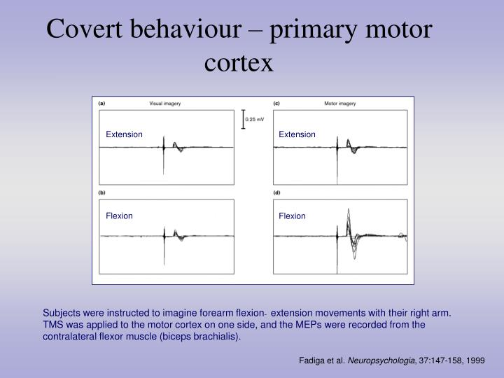 Covert behaviour – primary motor cortex