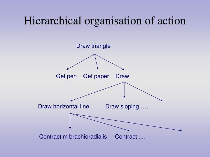 Hierarchical organisation of action