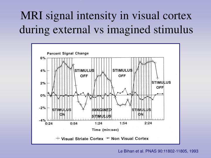 MRI signal intensity in visual cortex during external vs imagined stimulus