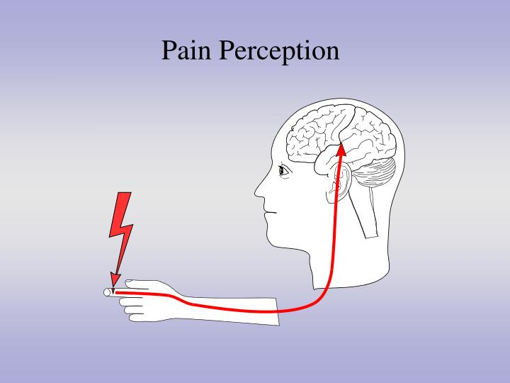 Pain Perception