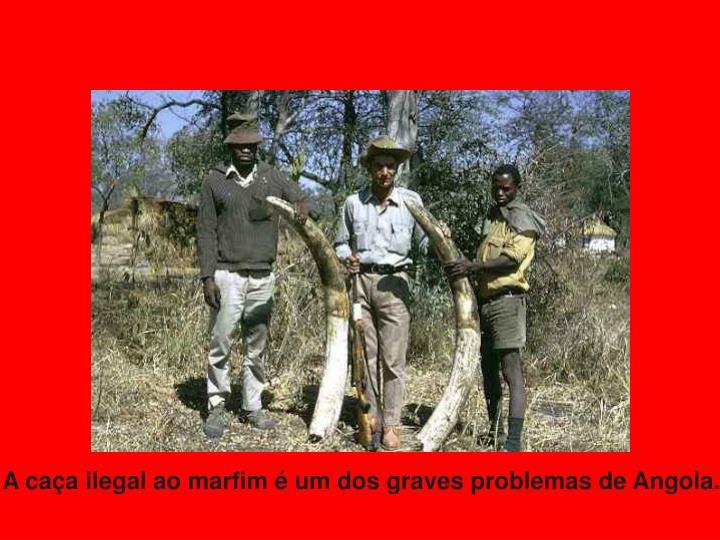 A caça ilegal ao marfim é um dos graves problemas de Angola.