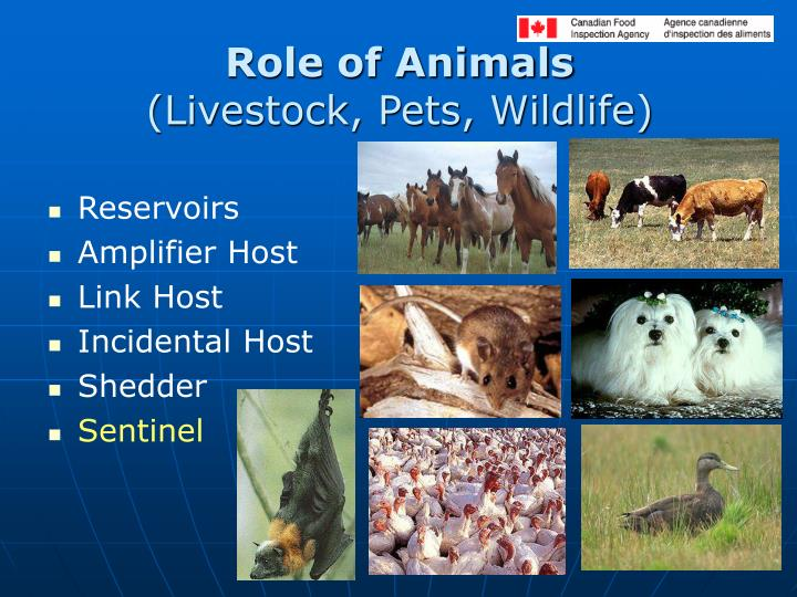 Role of Animals