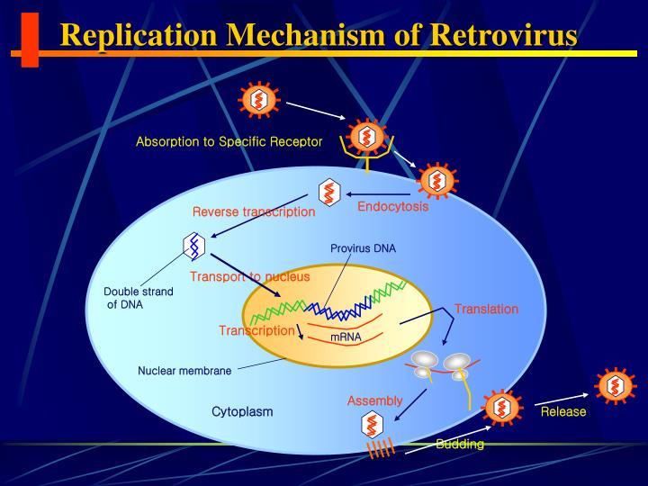 Replication Mechanism of Retrovirus