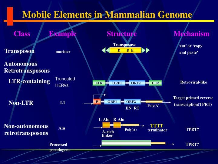 Mobile Elements in Mammalian Genome