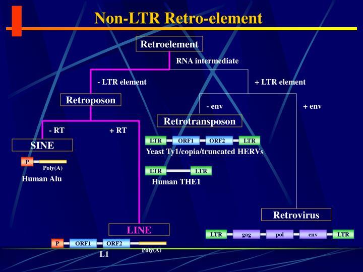 Non-LTR Retro-element