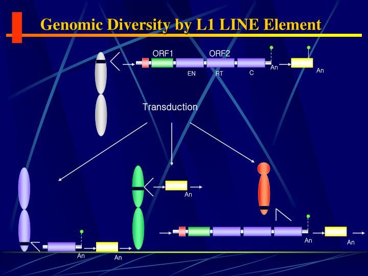 Genomic Diversity by L1 LINE Element
