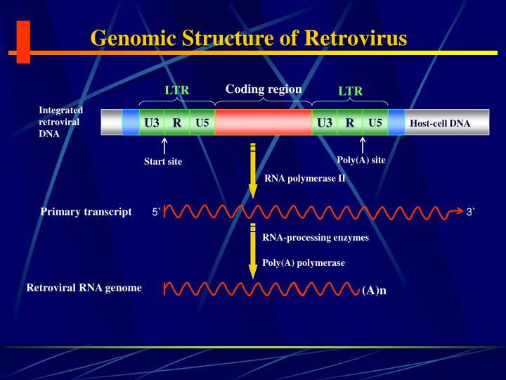 Genomic Structure of Retrovirus