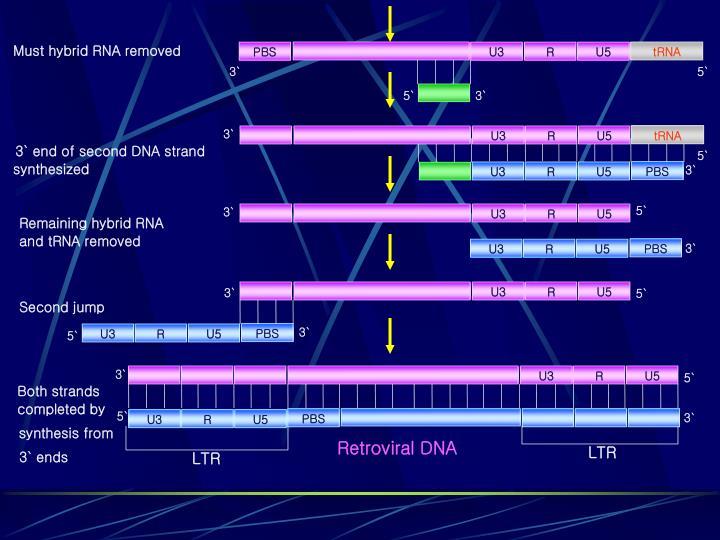 Must hybrid RNA removed