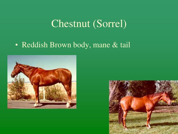 Chestnut (Sorrel)