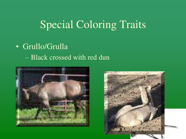 Special Coloring Traits