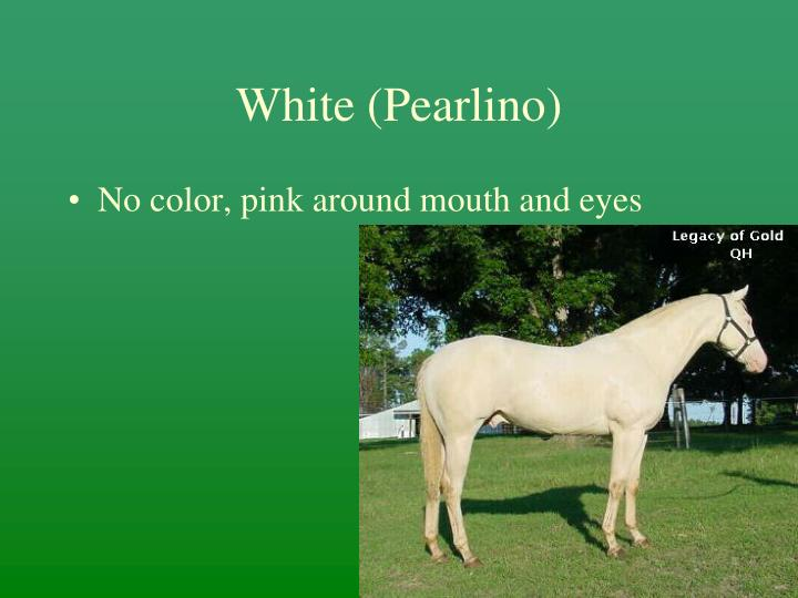 White (Pearlino)