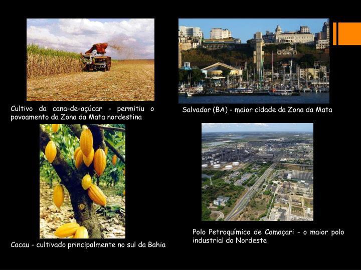 Cultivo da cana-de-açúcar - permitiu o povoamento da Zona da Mata nordestina
