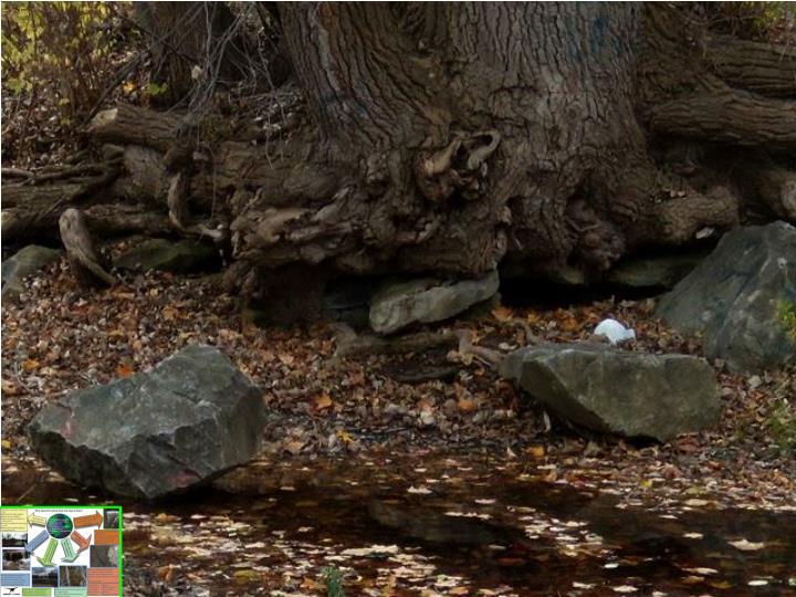 Undermined tree 2
