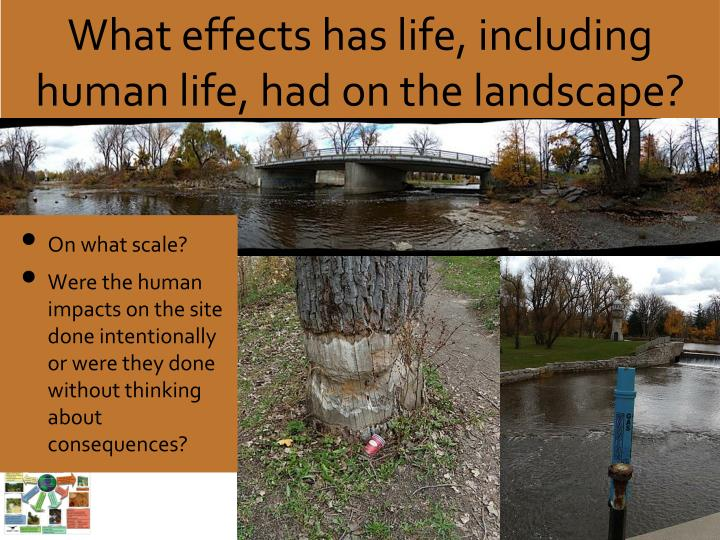 What effects has life, including human life, had on the landscape?