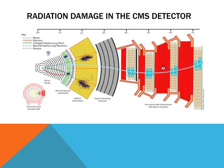 Radiation damage in the cms detector