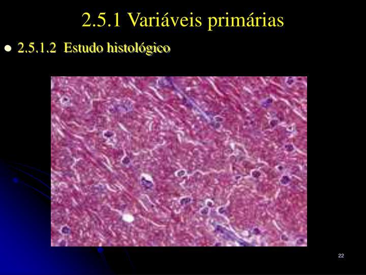 2.5.1.2  Estudo histológico