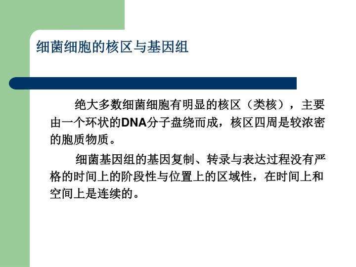 细菌细胞的核区与基因组
