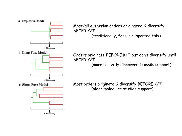 Most/all eutherian orders originated & diversify