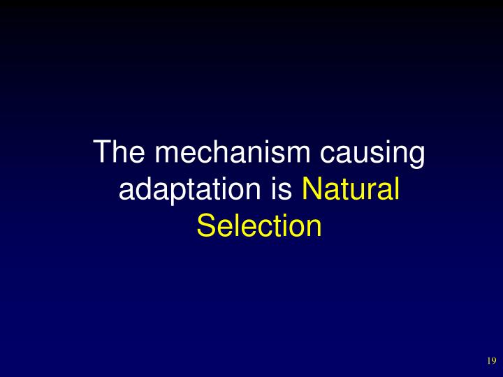 The mechanism causing adaptation is