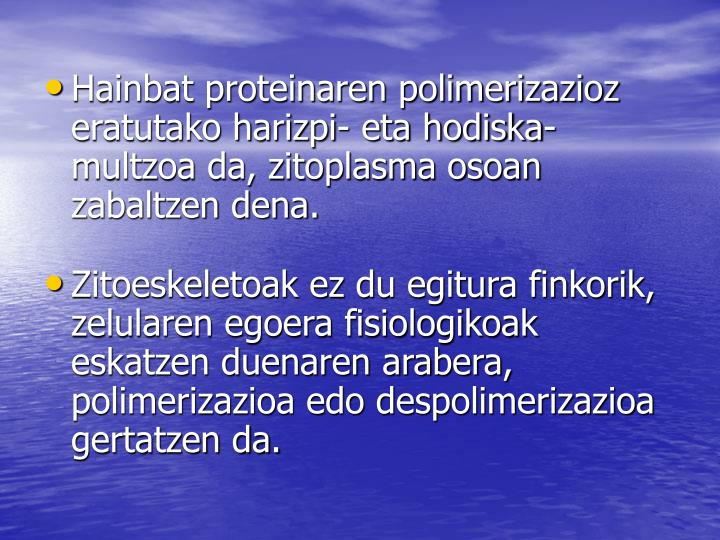Hainbat proteinaren polimerizazioz eratutako harizpi- eta hodiska-multzoa da, zitoplasma osoan zabaltzen dena.