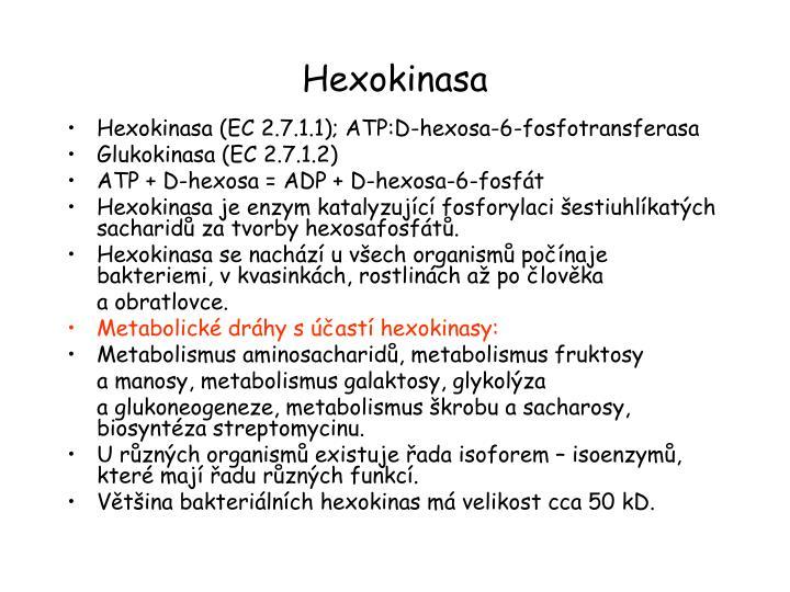 Hexokinasa