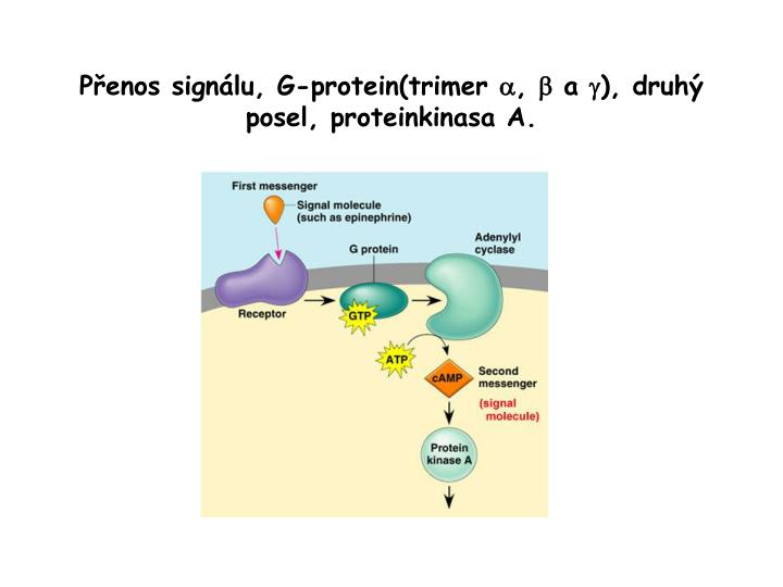 Přenos signálu, G-protein(trimer
