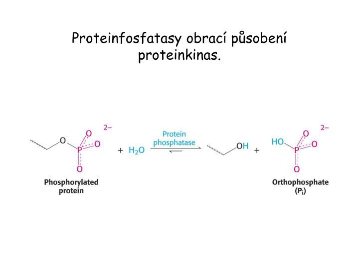 Proteinfosfatasy obrací působení proteinkinas.