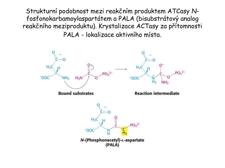Strukturní podobnost mezi reakčním produktem ATCasy