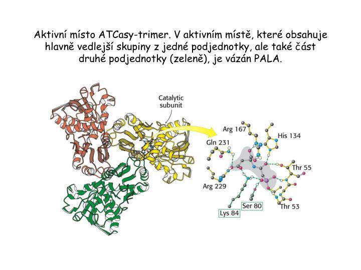 Aktivní místo ATCasy-trimer. V aktivním místě, které obsahuje hlavně vedlejší skupiny z jedné podjednotky, ale také část druhé podjednotky (zeleně), je vázán PALA.
