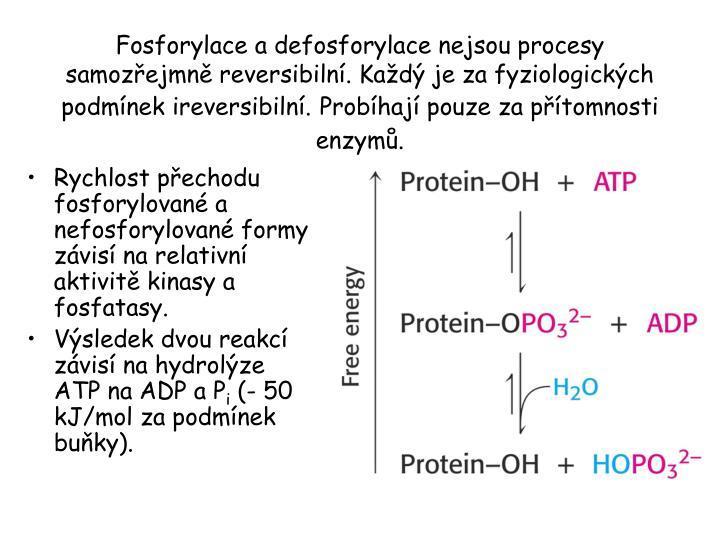 Rychlost přechodu fosforylované a nefosforylované formy závisí na relativní aktivitě kinasy a fosfatasy.