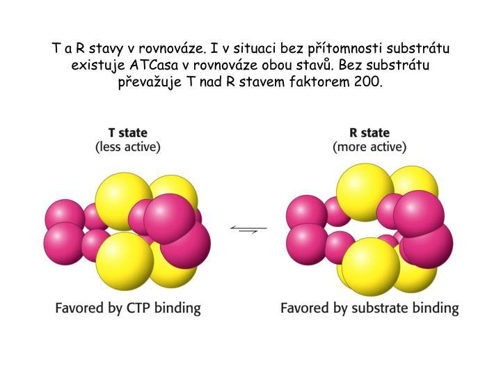 T a R stavy v rovnováze. I v situaci bez přítomnosti substrátu existuje ATCasa v rovnováze obou stavů. Bez substrátu převažuje T nad R stavem faktorem 200.