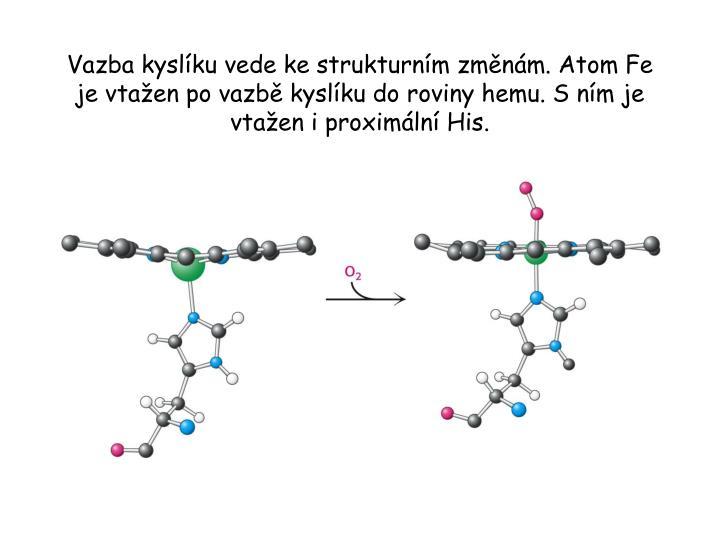Vazba kyslíku vede ke strukturním změnám. Atom Fe je vtažen po vazbě kyslíku do roviny hemu. S ním je vtažen i proximální His.