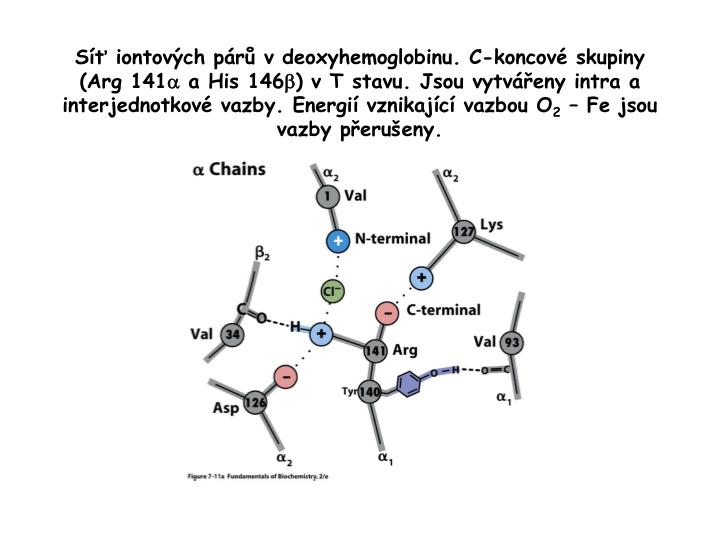 Síť iontových párů v deoxyhemoglobinu. C-koncové skupiny (Arg 141