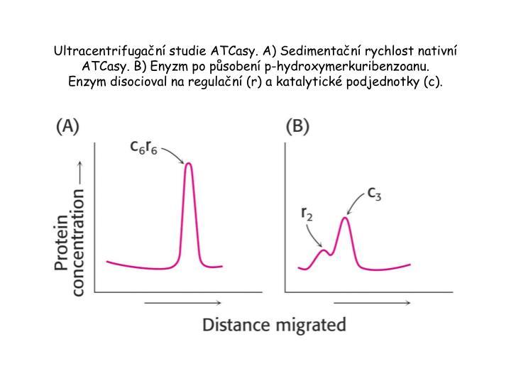 Ultracentrifugační studie ATCasy. A) Sedimentační rychlost nativní ATCasy. B) Enyzm po působení p-hydroxymerkuribenzoanu.