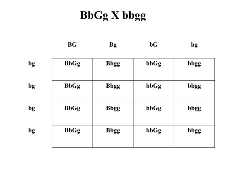 BbGg X bbgg