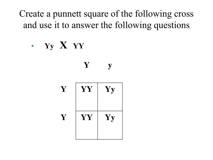 Create a punnett square of the following cross and use it to answer the following questions