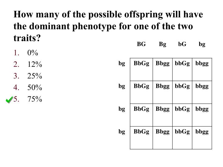 How many of the possible offspring will have the dominant phenotype for one of the two traits?