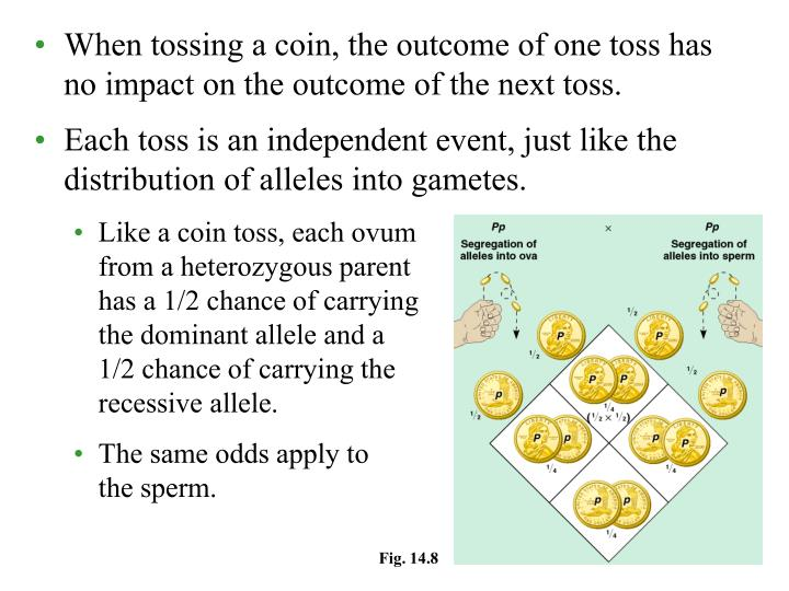 When tossing a coin, the outcome of one toss has no impact on the outcome of the next toss.