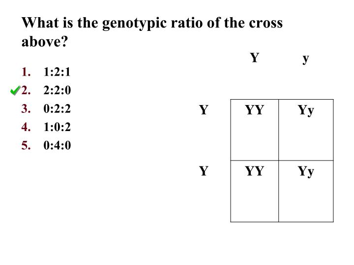 What is the genotypic ratio of the cross above?