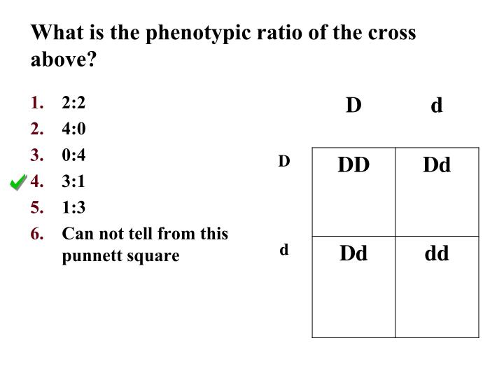 What is the phenotypic ratio of the cross above?