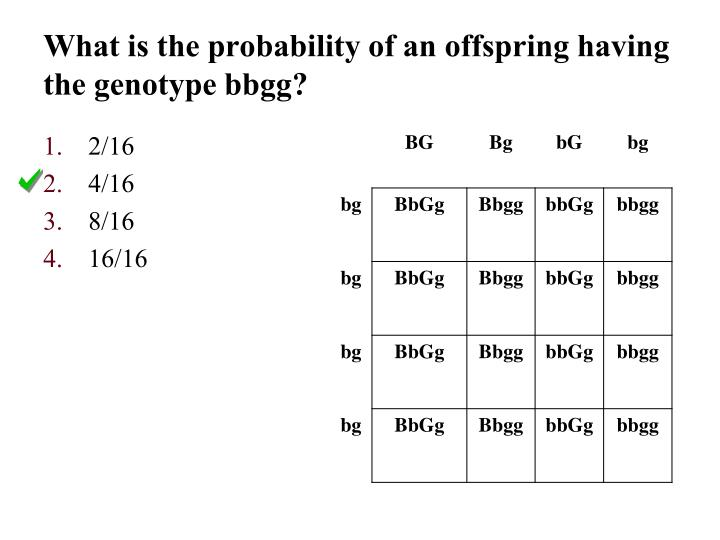 What is the probability of an offspring having the genotype bbgg?