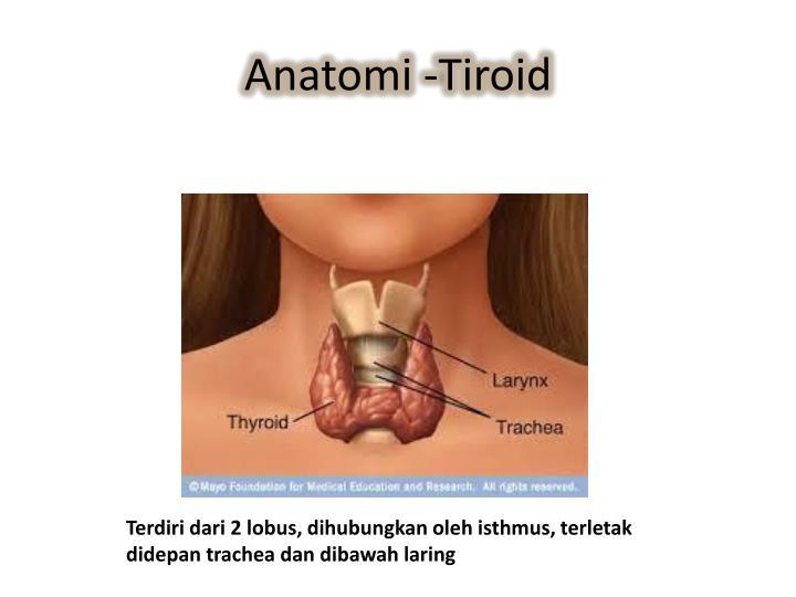 Anatomi -Tiroid