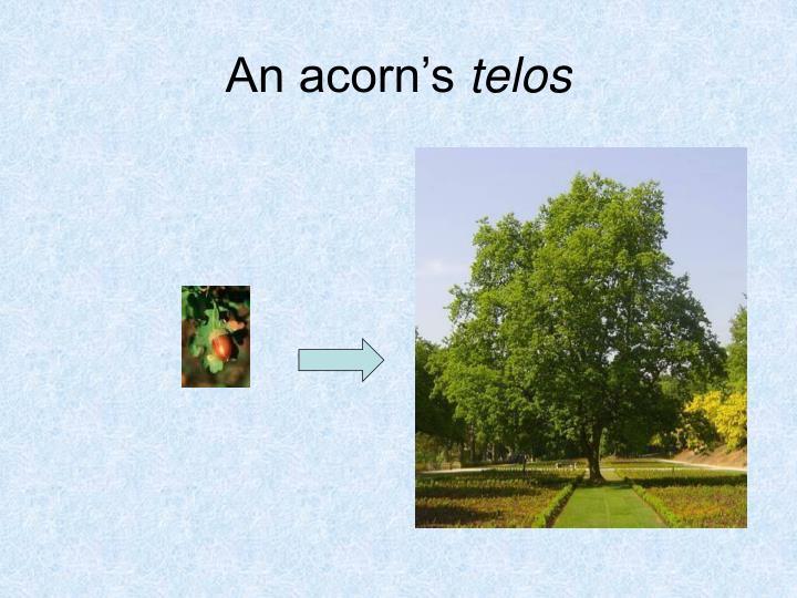 An acorn's