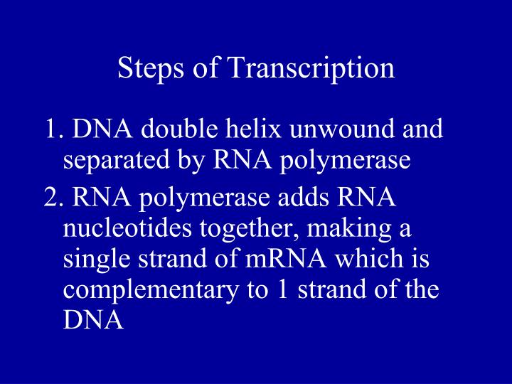 Steps of Transcription