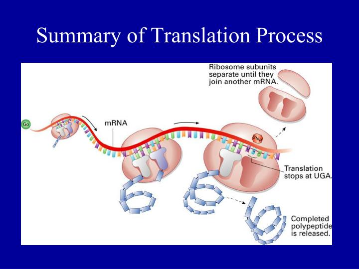 Summary of Translation Process