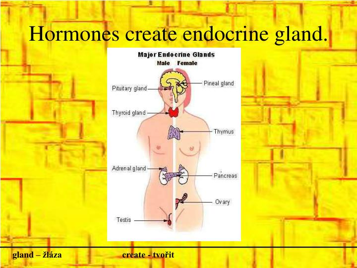 Hormones create endocrine gland
