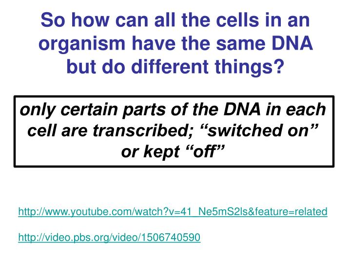 So how can all the cells in an organism have the same DNA but do different things?