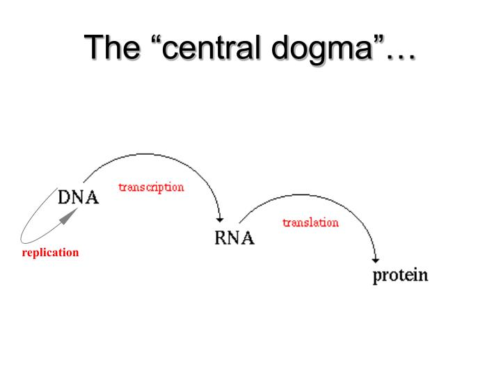 """The """"central dogma""""…"""