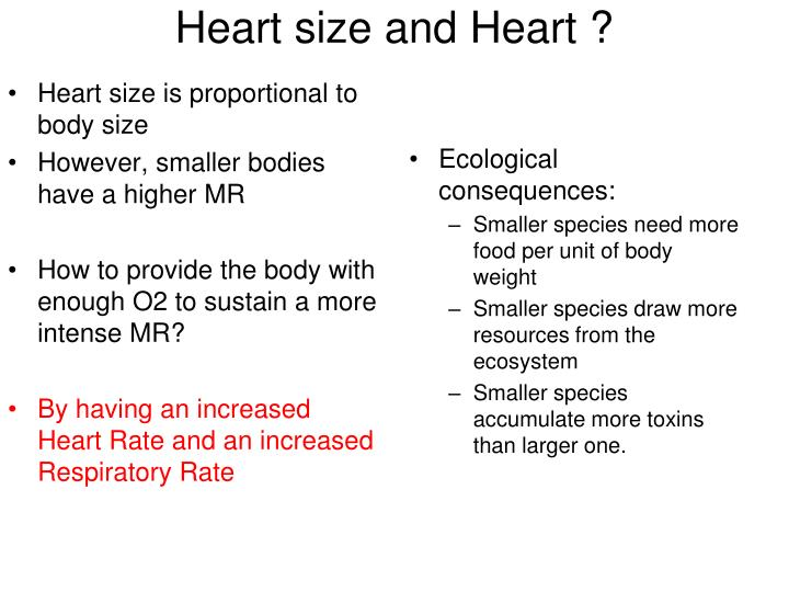 Heart size is proportional to body size